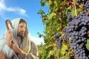 Evangelio del 13 de mayo del 2020 :: Miércoles de la V semana de Pascua