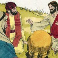 Evangelio del 19 de julio del 2020